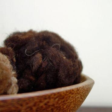 英國 ‧ 昔德蘭捲捲毛- SCW02 / 黑褐色